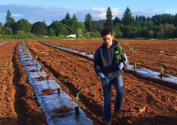 Sustainable Hemp Farm Oregon